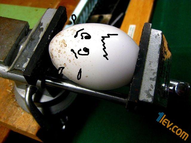 смях с яйца -www.1lev.com